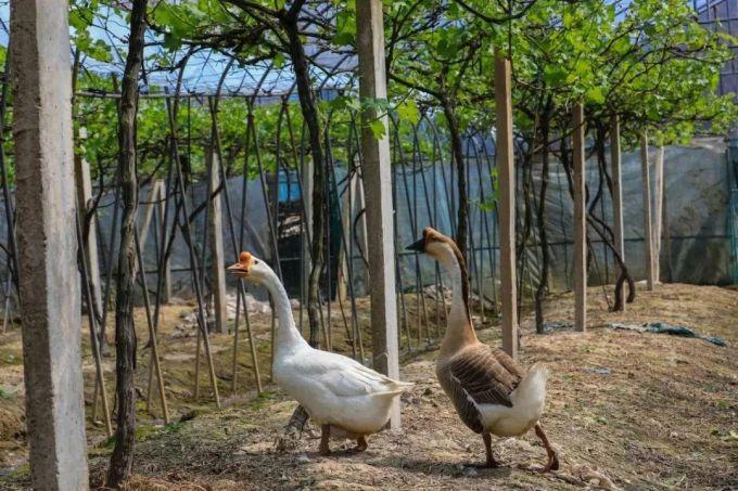 宁波白峰名阳农庄,都市农庄版开心农场
