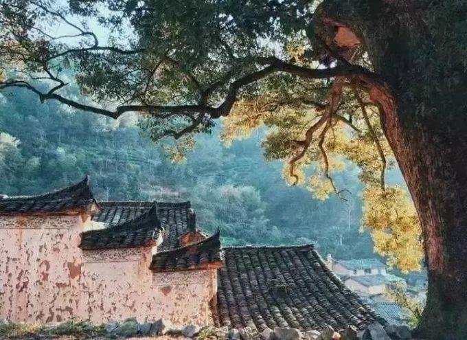 松阳·茑舍民宿,明清古街里的民国小院