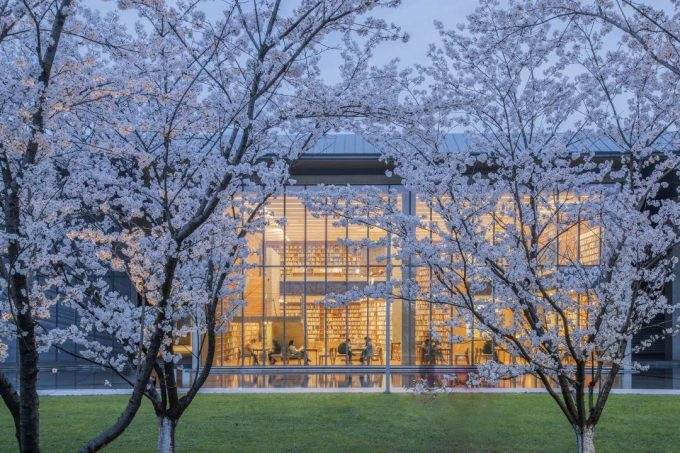 送你2021大屋顶樱花季门票!一起去看这个春天绝美风景~